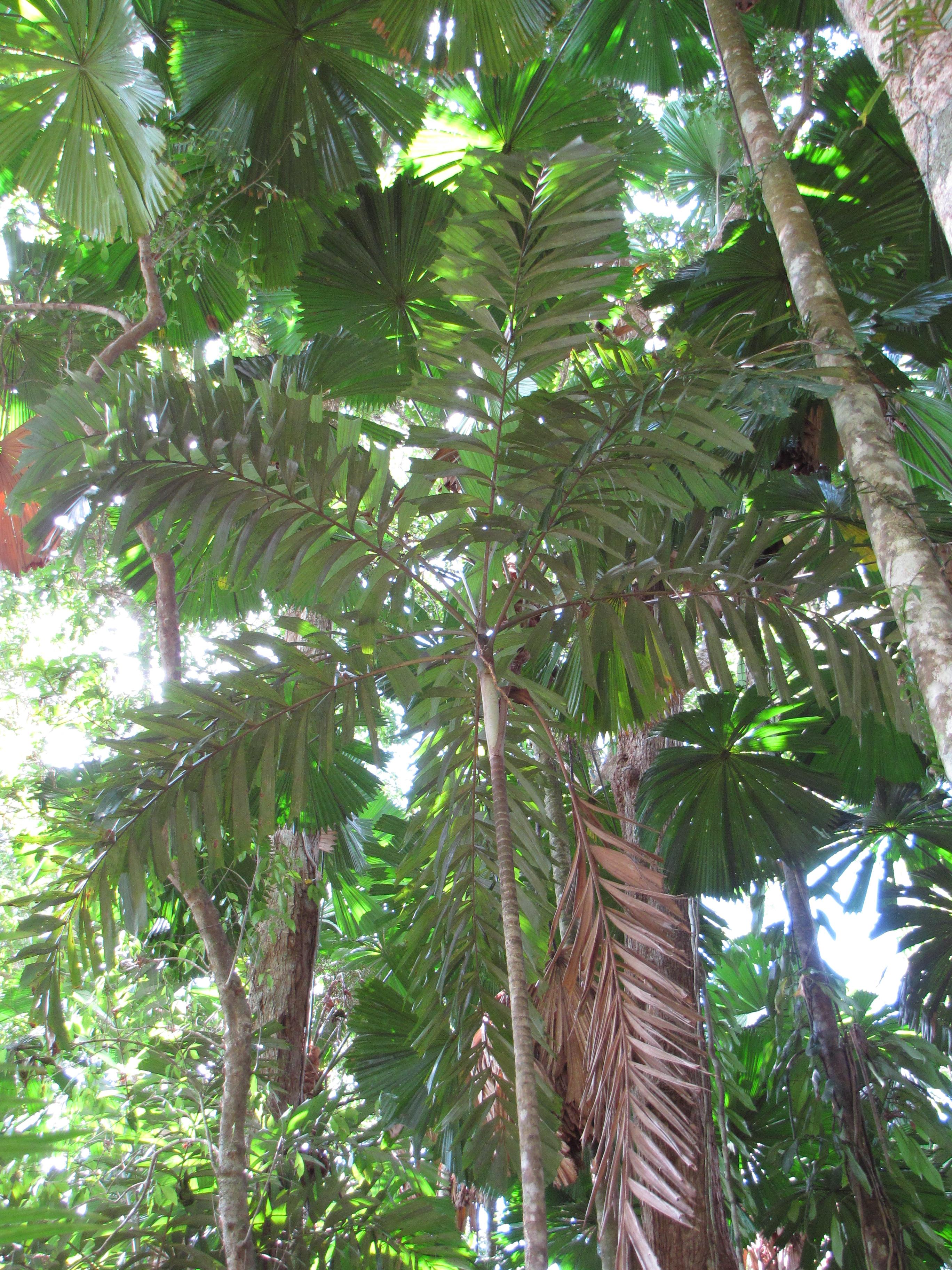 october 29 daintree rainforest